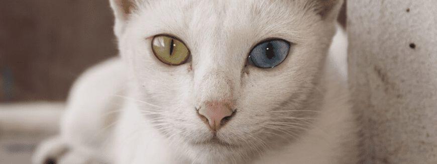 Что нужно знать, собираясь завести котенка